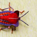 数多くいるカメムシの日本における種類で緑、赤、茶、黒色?