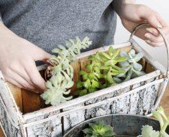 カメムシ 対策 植物