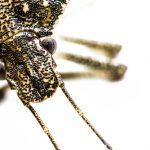 春と秋は何故カメムシが多い?その理由と対策について