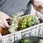緑で対策!カメムシに効く植物!